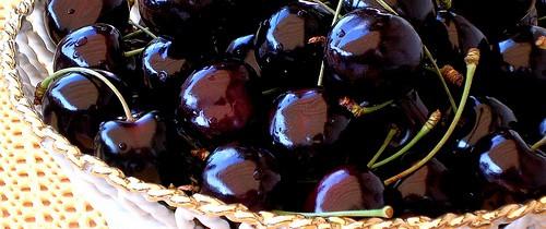 Tipps gegen Fruchtfliegen im Haushalt
