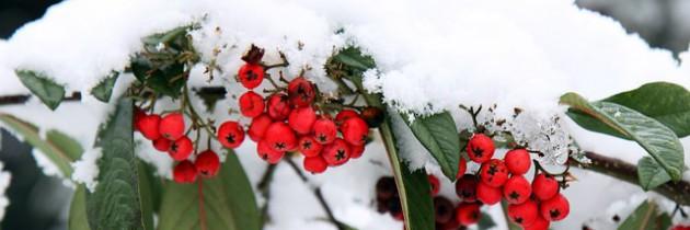 Gartenmobel Im Winter Draussen Stehen Lassen Mobel Blog
