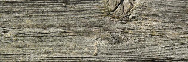 Holzarten und deren Verwendung