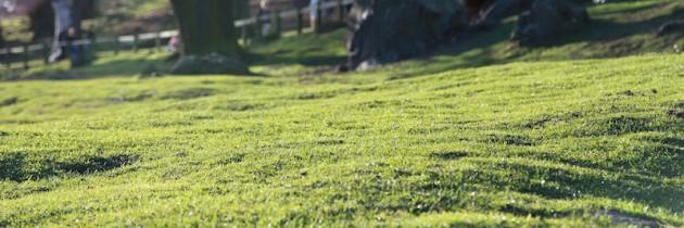 Vertikutieren – Ihren Rasen wiederbeleben