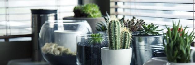 5 Tipps zur Abkühlung in der Wohnung