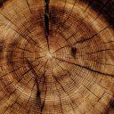 Den Wald ins Wohnzimmer holen mit Echtholzmöbeln